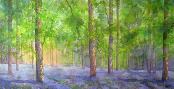 Bluebells, Queenswood I