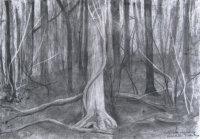 December - Ash Tree