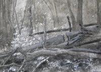 Fallen Beech - studio study for painting