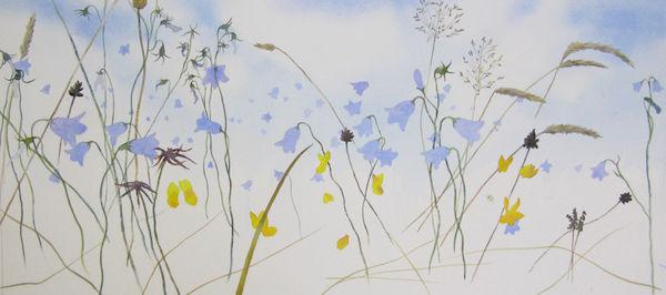 watercolour harebells