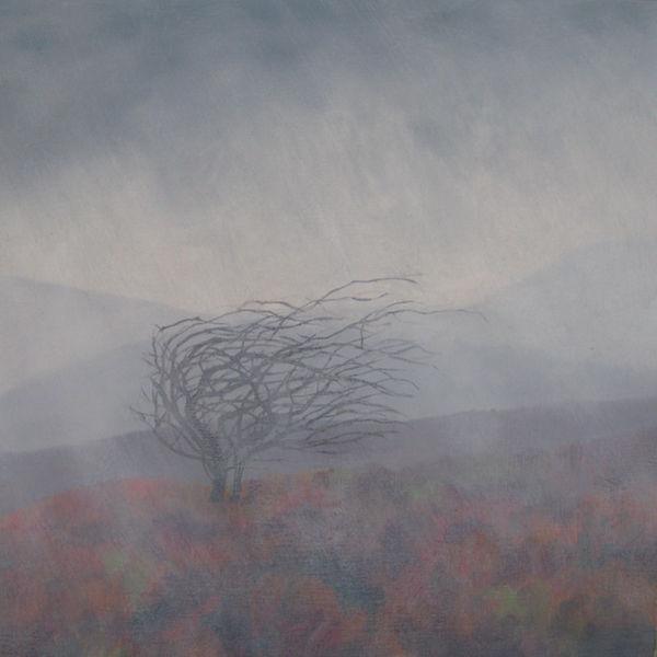 oil Exmoor hawthorn