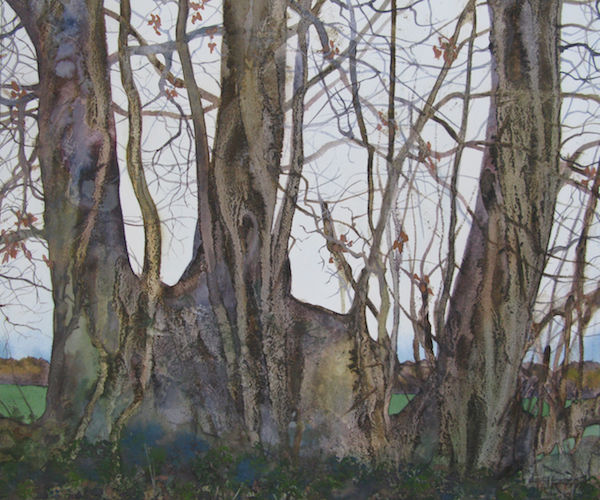 oak hedgerow watercolour