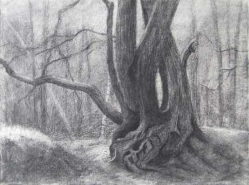 Oak Tree II