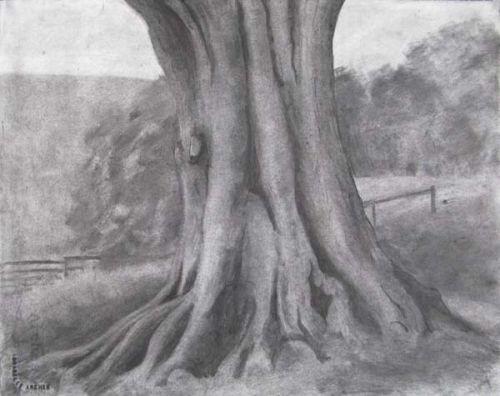 Oak Tree Study I
