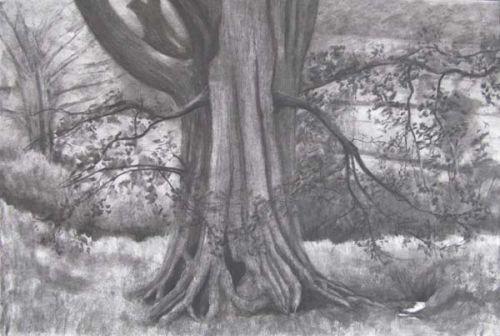 Oak Tree Study II