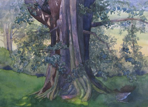 Oak Tree VI