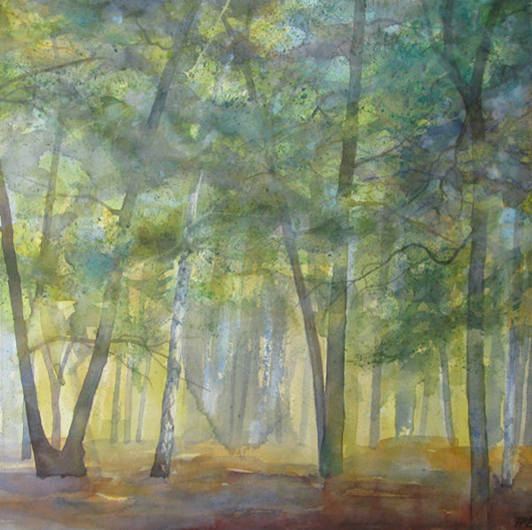 Oak Wood - late summer light