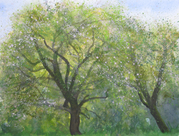 Old Apple Trees - sketch