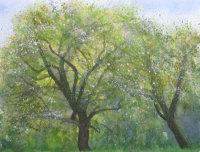 Old Apple Trees - sketch