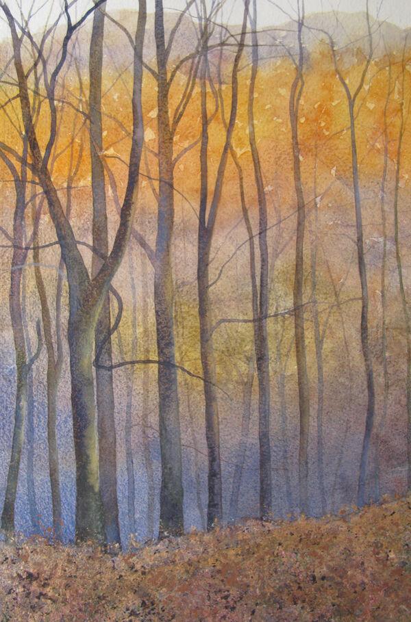 larches autumn sunshine
