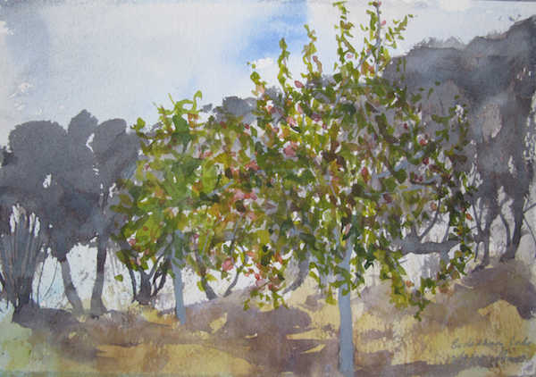 Pear Trees, Evening - sketch