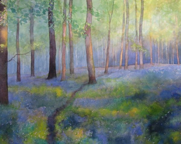 Queenswood - dappled bluebells