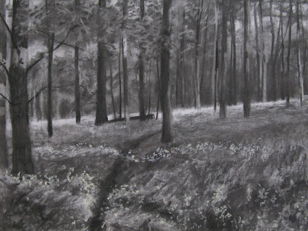charcoal woodland bluebells