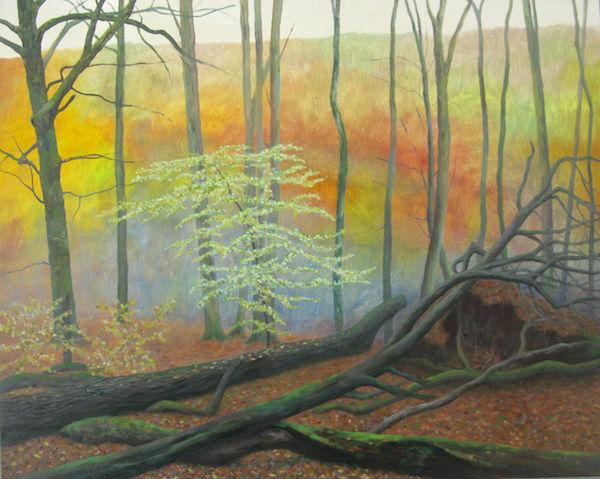 oil woodland regeneration