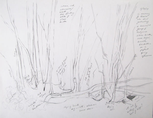 outdoor drawing silver birches
