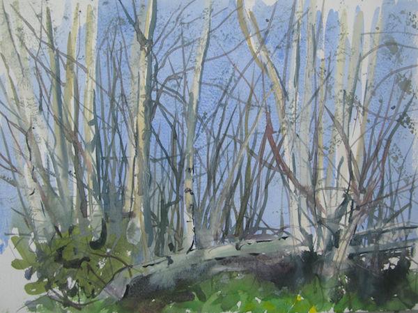 watercolour outdoor birches