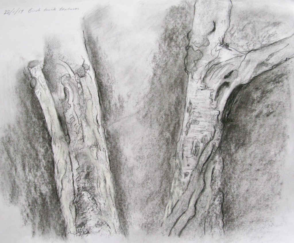 charcoal sketch birch