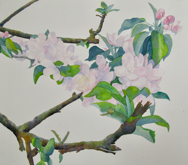 watercolour apple blossom