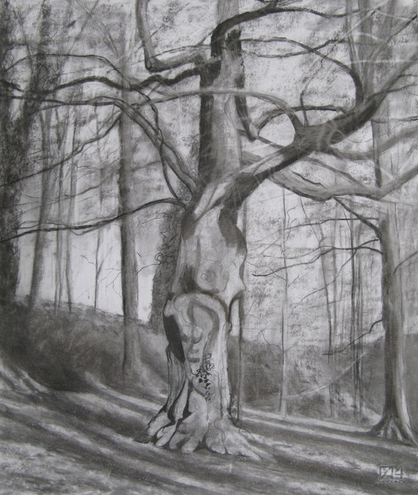 charcoal sketch chestnut tree