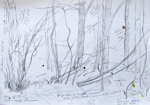 outdoor sketch woodland