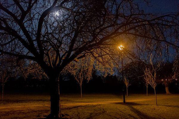 Full Moon on the Stray