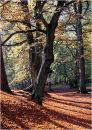 Hookstone woods in Autumn
