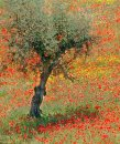 Olive Tree & Poppies