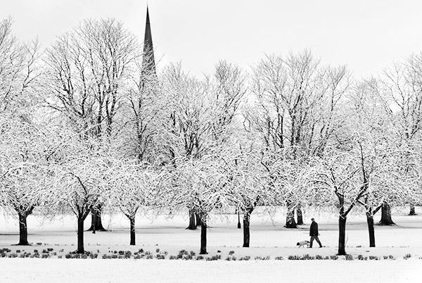 Stray Snow