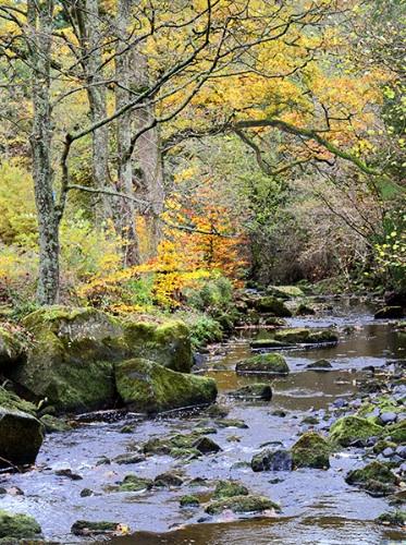 Washburn Autumn
