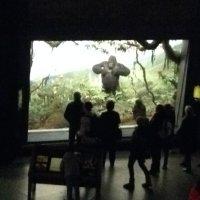 Akeley's Gorilla Diorama