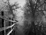 Mystic Tree Lake