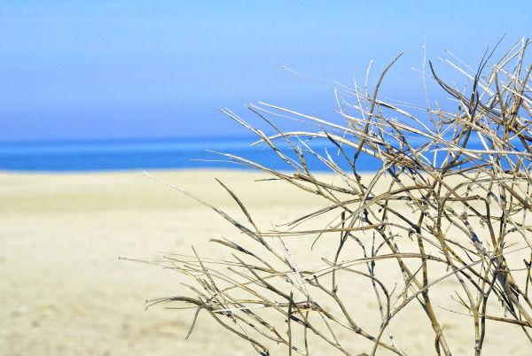 Beach protection