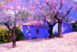 Blue Hut in a Blossom Field