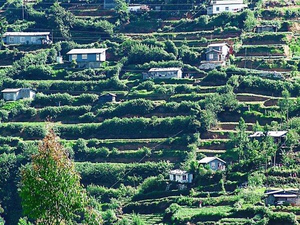 Plantation homes in Sri Lanka