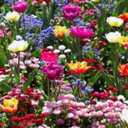 Hastings Flowerbed