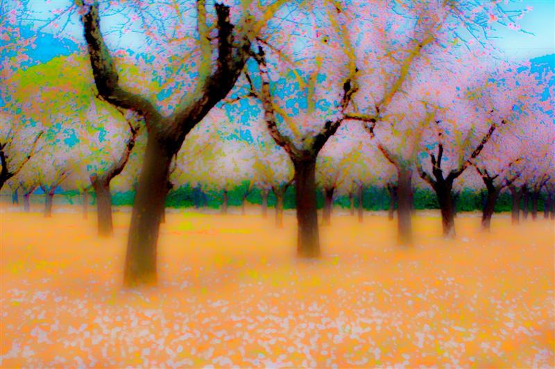 Hazy Blossom