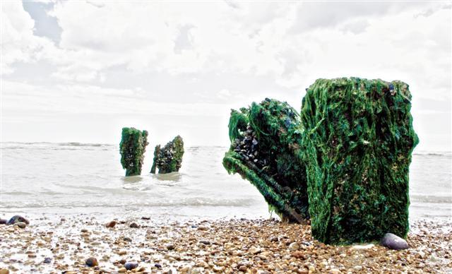 Seaweed on Wood
