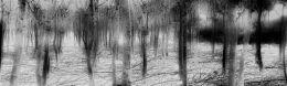 Trees Laid Bare