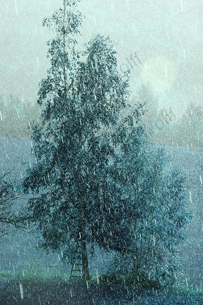 Tree in hail