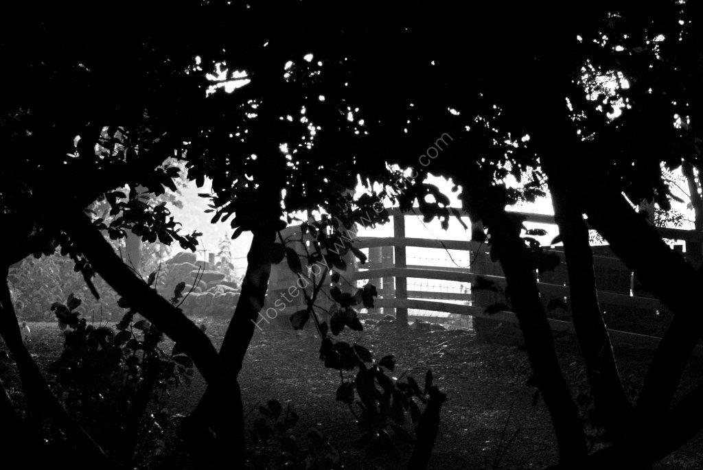 Eerie Woodland area