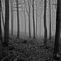 Chevin Forest, Otley