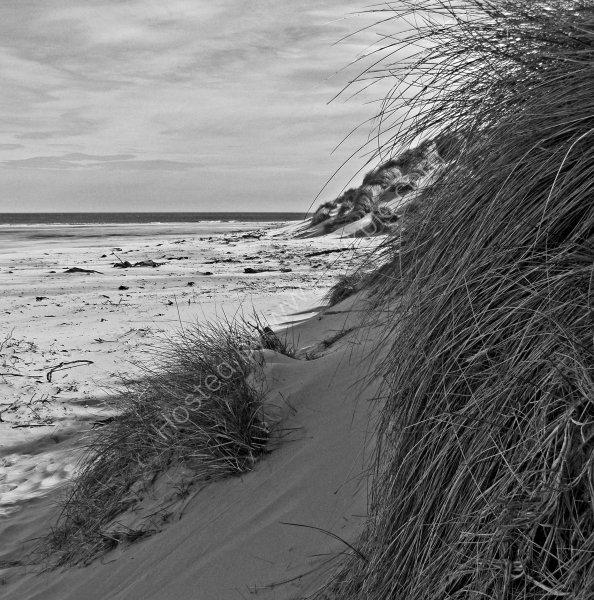 Dunes, Bamburgh, Northumberland