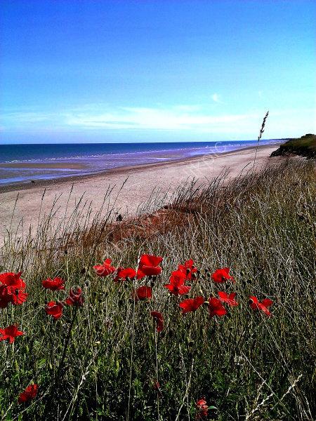 Poppies at Barmston Beach