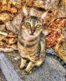 Camouflage Kat