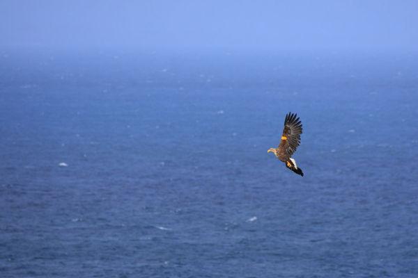 WT Eagle Retiring Gracefully...
