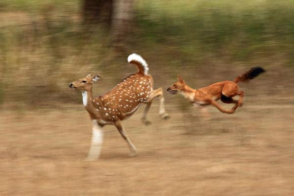India - Kanha National Park December 2010