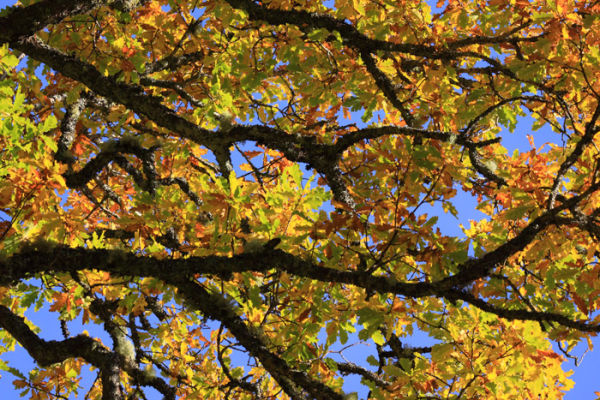 Canopy Colours