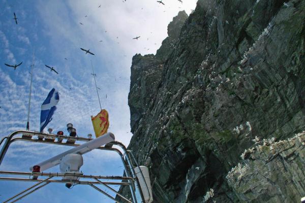 Cliffs and Gannets