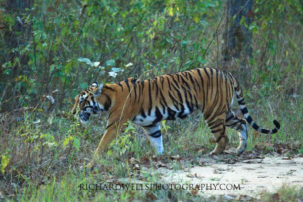 India 2012 - Kanha and Satpura