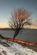 Sunlit Tree Drinan